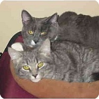 Adopt A Pet :: Mickey - Syracuse, NY