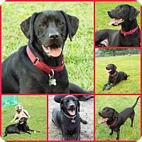 Adopt A Pet :: JEFFERSON - Inverness, FL