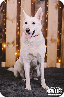 German Shepherd Dog Mix Dog for adoption in Portland, Oregon - Soloman