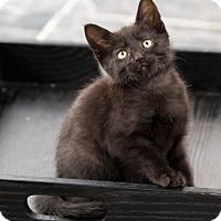Adopt A Pet :: Darryl - Chicago, IL