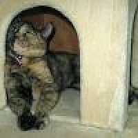 Domestic Shorthair Cat for adoption in Powell, Ohio - Snickers