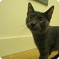 Adopt A Pet :: Ivy - Milwaukee, WI
