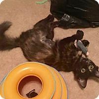 Adopt A Pet :: Ginger - Adoption Pending! - Colmar, PA