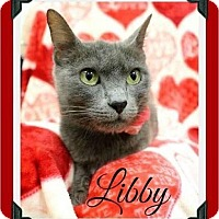 Adopt A Pet :: Libby - Fort Worth, TX