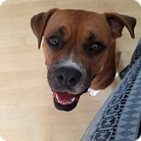 Adopt A Pet :: Molly-COURTESY POST - Chesterfield, MI