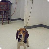 Adopt A Pet :: Juliet - Gulfport, MS