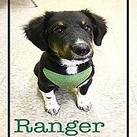 Adopt A Pet :: Ranger - Warren, PA
