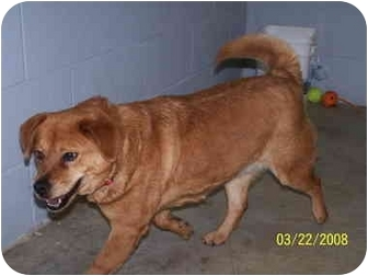 Chow Chow Mix Dog for adoption in Shelbyville, Kentucky - Tatiana