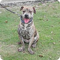 Adopt A Pet :: Cinnamon - Coral Springs, FL