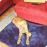 Adopt A Pet :: EMILY - Jacksonville, FL