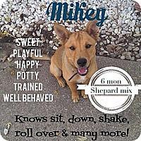 Adopt A Pet :: Mikey (PENDING) - Fenton, MI