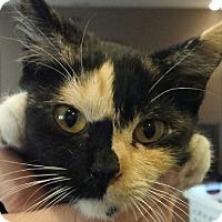 Adopt A Pet :: Mojo - Chandler, AZ