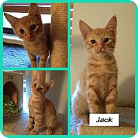 Adopt A Pet :: Jack - Miami, FL