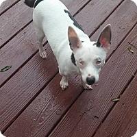 Adopt A Pet :: Angelo - Brooksville, FL