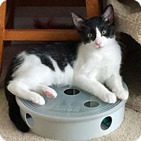 Adopt A Pet :: Brady - Merrifield, VA