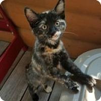 Adopt A Pet :: Poppy - McHenry, IL