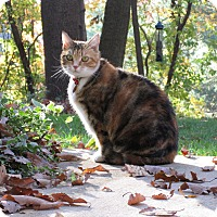 Adopt A Pet :: Gertrude (COURTESY POST) - Baltimore, MD