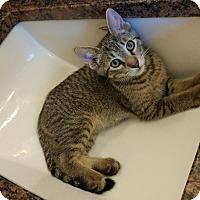 Adopt A Pet :: Al - Naperville, IL