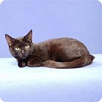 Adopt A Pet :: Phemie - Cary, NC