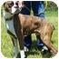 Photo 4 - Boxer Dog for adoption in North Judson, Indiana - Dozer