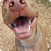 Adopt A Pet :: Trip - Cedar Creek, TX