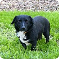 Adopt A Pet :: Vince - Mocksville, NC