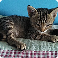 Adopt A Pet :: Indy - Monroe, NC