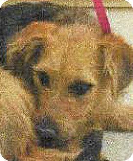 Terrier (Unknown Type, Medium) Mix Dog for adoption in Spokane, Washington - Billy