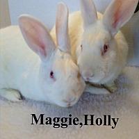 Adopt A Pet :: Maggie/Molly - Auburn, CA