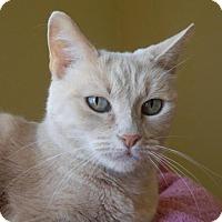 Adopt A Pet :: Cristal - Prescott, AZ