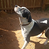 Adopt A Pet :: London - Demorest, GA