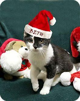Domestic Shorthair Kitten for adoption in Rochester, New York - Beth