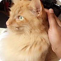 Adopt A Pet :: Toby - Chattanooga, TN