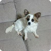 Adopt A Pet :: Ava - Pearisburg, VA