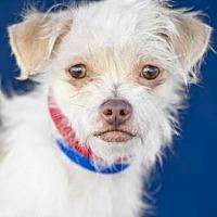 Adopt A Pet :: Clovis - Colorado Springs, CO