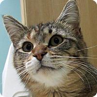 Adopt A Pet :: Eva - Roseville, MN