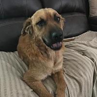 Adopt A Pet :: Lexa - San Antonio, TX