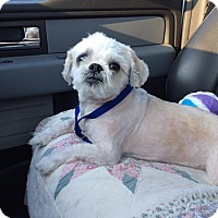 Adopt A Pet :: Bandi - Windham, NH