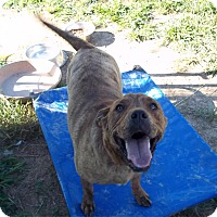 Adopt A Pet :: Mollie - Hohenwald, TN