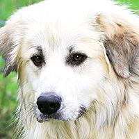 Adopt A Pet :: OLAF ( BEYOND BEAUTIFUL) - Wakefield, RI