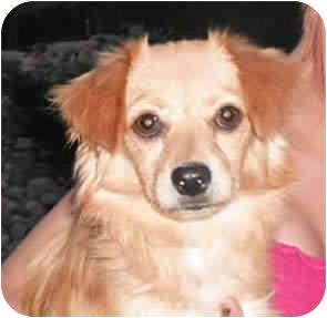 Spaniel (Unknown Type) Mix Dog for adoption in Reno, Nevada - Purugly