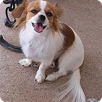 Adopt A Pet :: Leah - San Angelo, TX