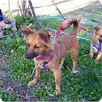 Adopt A Pet :: HALEY - Hesperus, CO