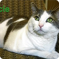Adopt A Pet :: Lacie - Medway, MA