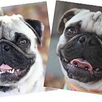 Adopt A Pet :: Bella - Pismo Beach, CA