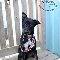 Adopt A Pet :: Bonnie - Liberty, MO