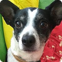 Adopt A Pet :: Cooper - San Francisco, CA