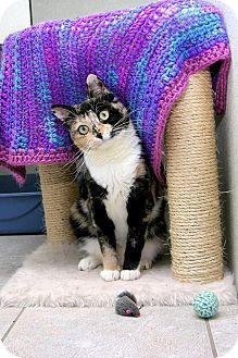 Calico Cat for adoption in Stamford, Connecticut - MISCESU