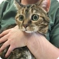 Adopt A Pet :: Penny - McHenry, IL