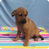 Adopt A Pet :: Fallon - East Sparta, OH